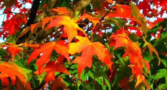 autumn tea party autumn sugar maple leaves fall color